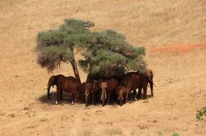 kenya-tsavo-safari-111698_640-pixabay