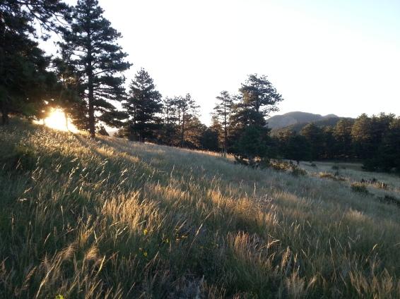 madeline-bachner-calwood-summer-sunrise